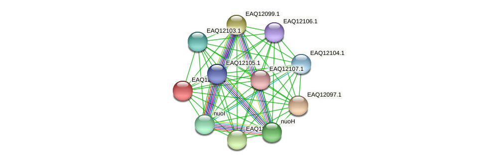 RB2654_01310 protein (Maritimibacter alkaliphilus) - STRING interaction network