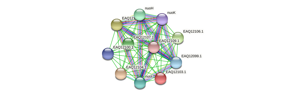 RB2654_01335 protein (Maritimibacter alkaliphilus) - STRING interaction network