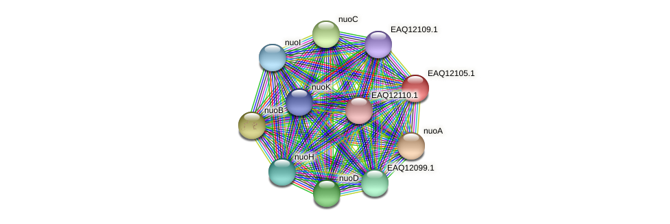 RB2654_01345 protein (Maritimibacter alkaliphilus) - STRING interaction network