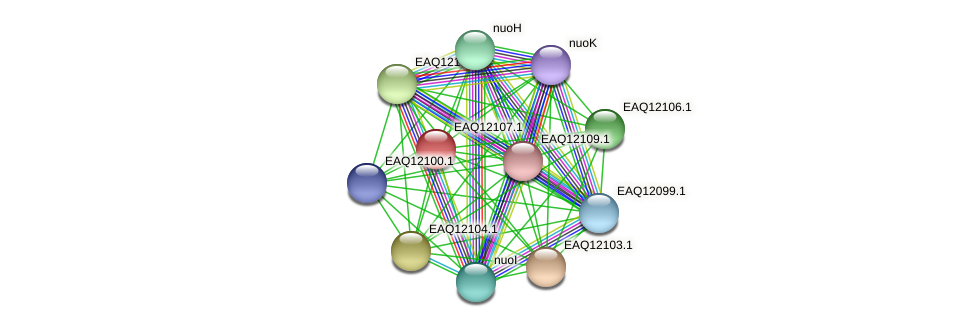 RB2654_01355 protein (Maritimibacter alkaliphilus) - STRING interaction network
