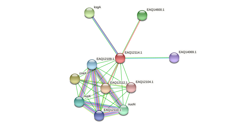 RB2654_01390 protein (Maritimibacter alkaliphilus) - STRING interaction network