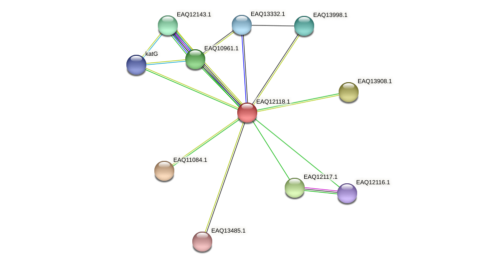 RB2654_01410 protein (Maritimibacter alkaliphilus) - STRING interaction network