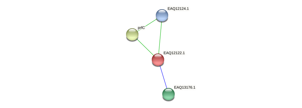 RB2654_01430 protein (Maritimibacter alkaliphilus) - STRING interaction network