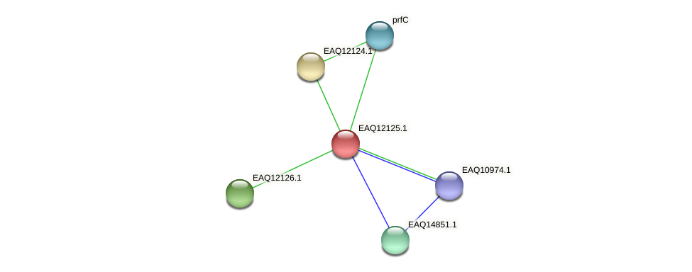 RB2654_01445 protein (Maritimibacter alkaliphilus) - STRING interaction network