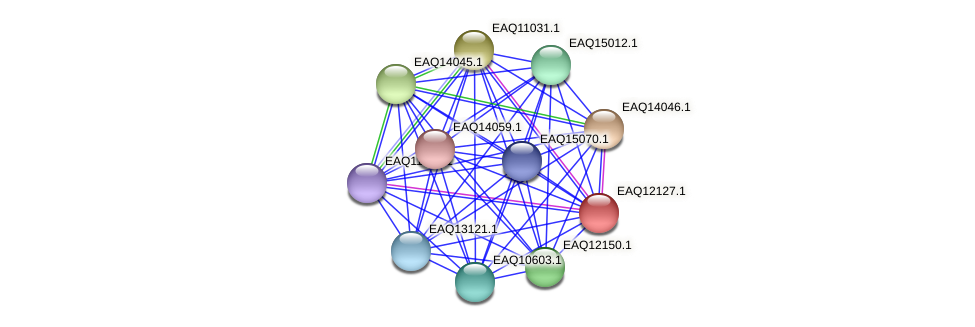 RB2654_01455 protein (Maritimibacter alkaliphilus) - STRING interaction network