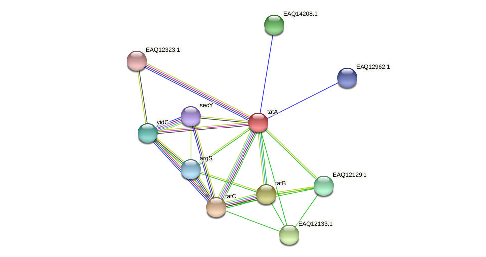 RB2654_01470 protein (Maritimibacter alkaliphilus) - STRING interaction network