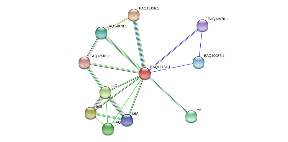 RB2654_01490 protein (Maritimibacter alkaliphilus) - STRING interaction network