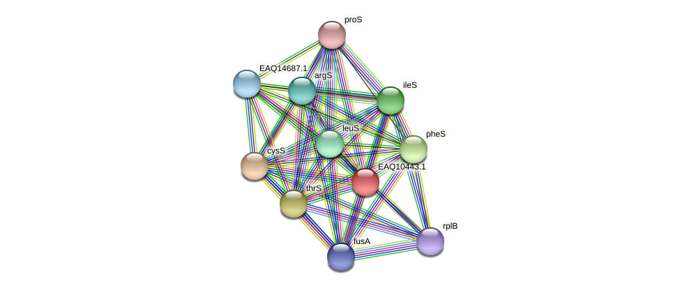 RB2654_01495 protein (Maritimibacter alkaliphilus) - STRING interaction network