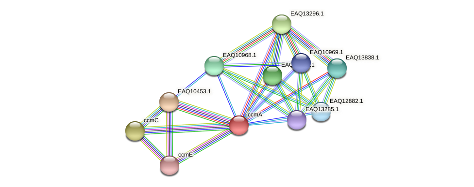 ccmA protein (Maritimibacter alkaliphilus) - STRING interaction network