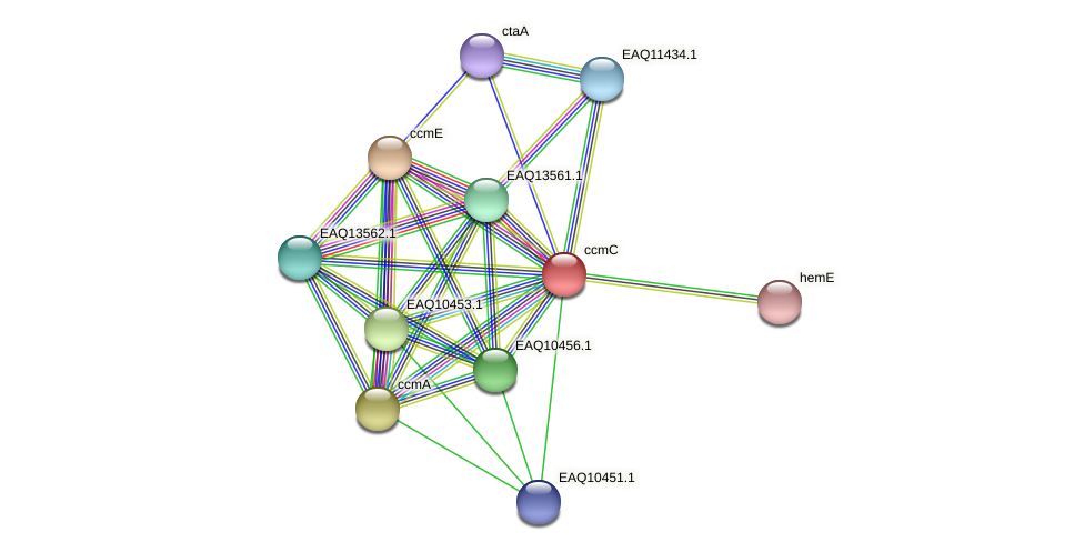 RB2654_01550 protein (Maritimibacter alkaliphilus) - STRING interaction network