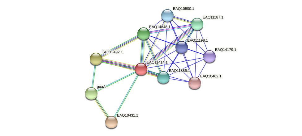RB2654_01595 protein (Maritimibacter alkaliphilus) - STRING interaction network