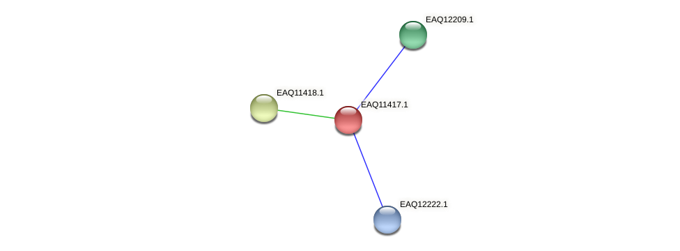 RB2654_01610 protein (Maritimibacter alkaliphilus) - STRING interaction network