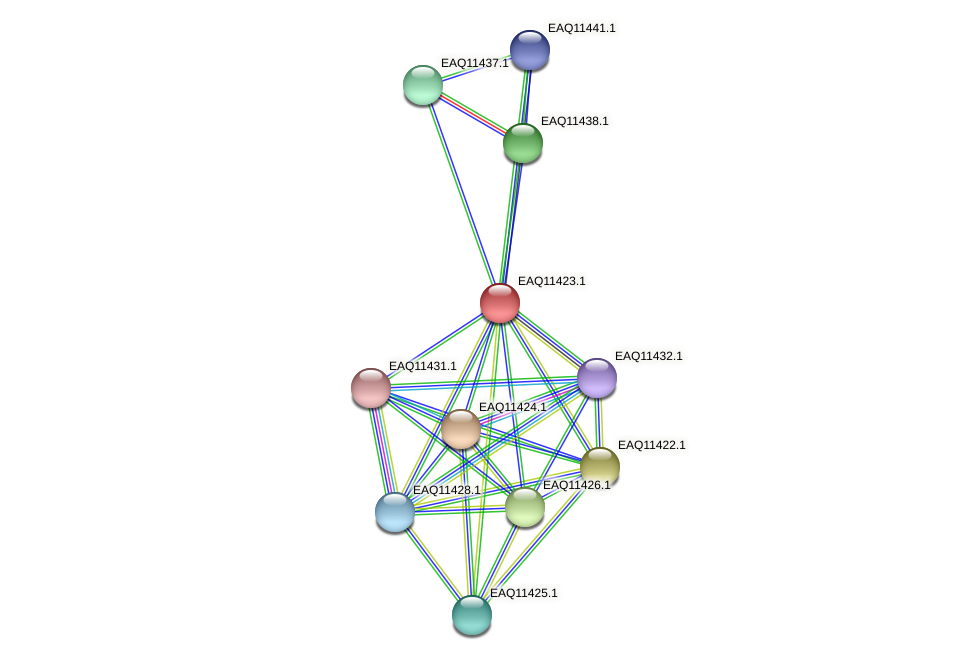 RB2654_01640 protein (Maritimibacter alkaliphilus) - STRING interaction network