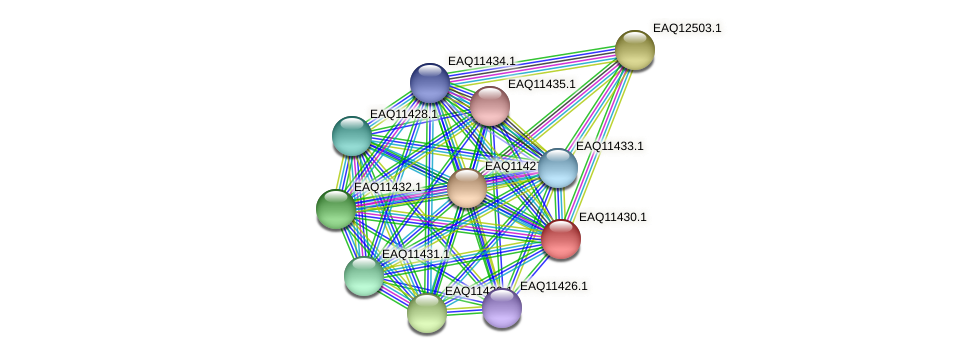 RB2654_01675 protein (Maritimibacter alkaliphilus) - STRING interaction network