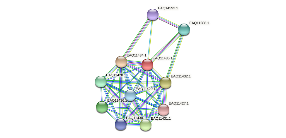 RB2654_01700 protein (Maritimibacter alkaliphilus) - STRING interaction network