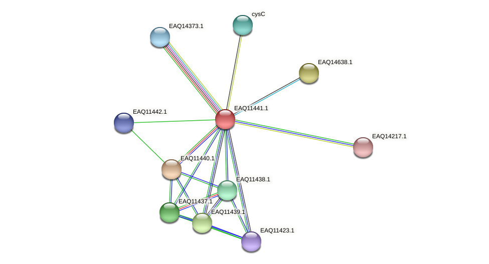 RB2654_01730 protein (Maritimibacter alkaliphilus) - STRING interaction network