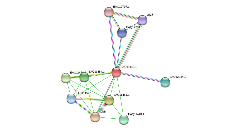 RB2654_01770 protein (Maritimibacter alkaliphilus) - STRING interaction network