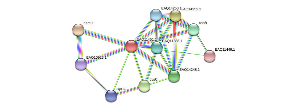 RB2654_01780 protein (Maritimibacter alkaliphilus) - STRING interaction network