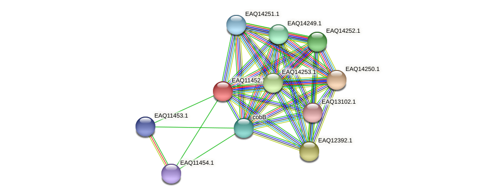 RB2654_01785 protein (Maritimibacter alkaliphilus) - STRING interaction network