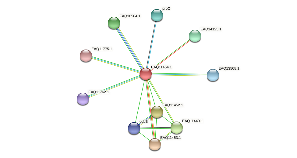 RB2654_01795 protein (Maritimibacter alkaliphilus) - STRING interaction network