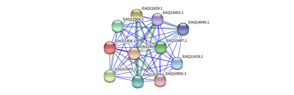 RB2654_01805 protein (Maritimibacter alkaliphilus) - STRING interaction network