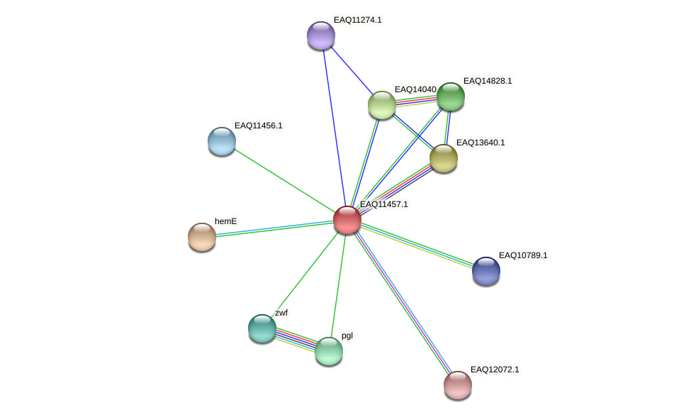 RB2654_01810 protein (Maritimibacter alkaliphilus) - STRING interaction network