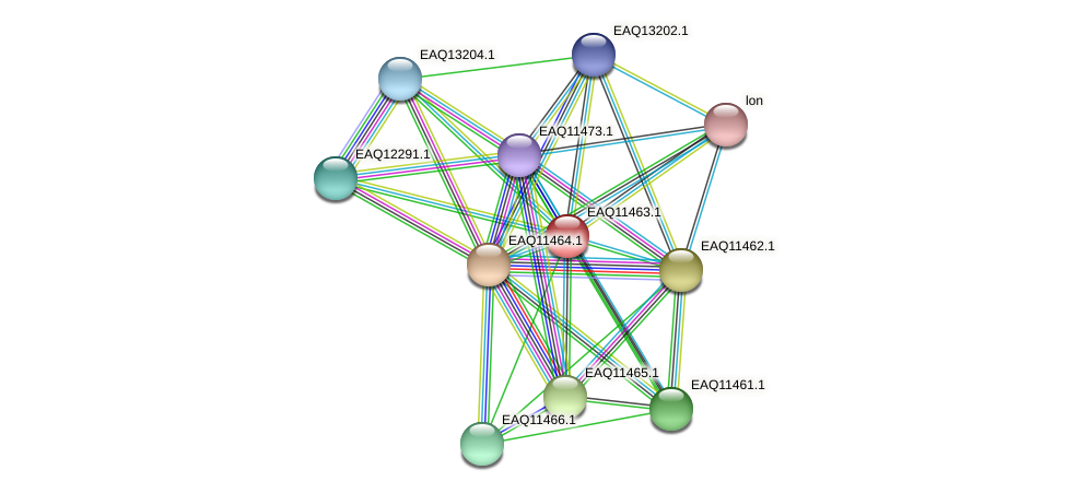 RB2654_01840 protein (Maritimibacter alkaliphilus) - STRING interaction network