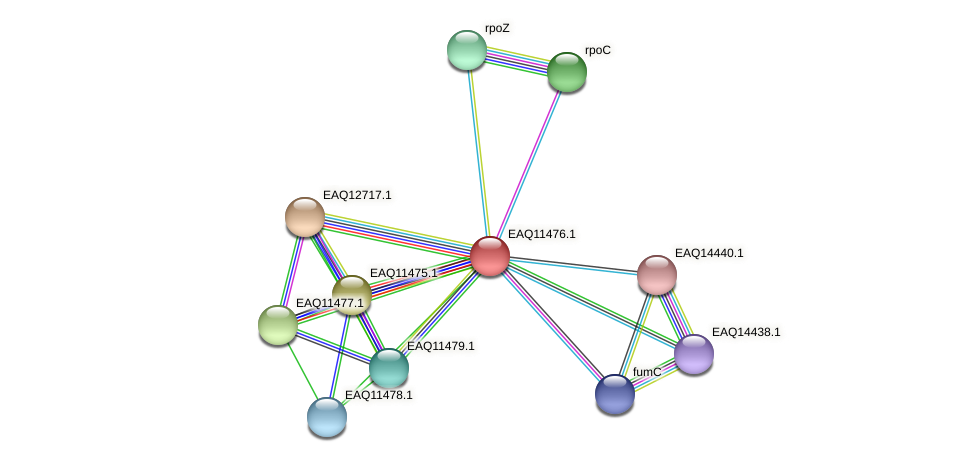 RB2654_01905 protein (Maritimibacter alkaliphilus) - STRING interaction network