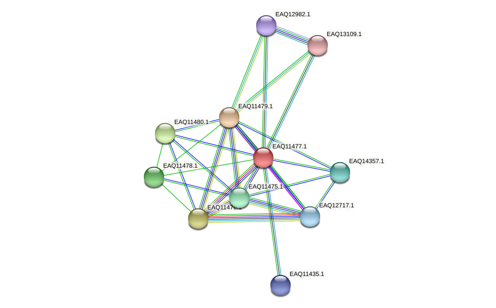 RB2654_01910 protein (Maritimibacter alkaliphilus) - STRING interaction network