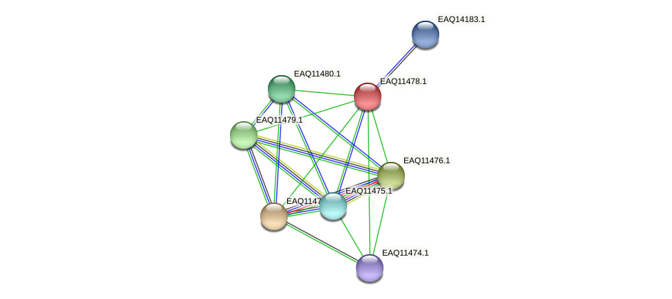 RB2654_01915 protein (Maritimibacter alkaliphilus) - STRING interaction network