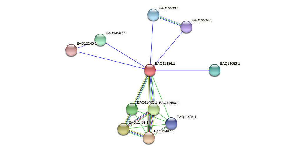 RB2654_01955 protein (Maritimibacter alkaliphilus) - STRING interaction network