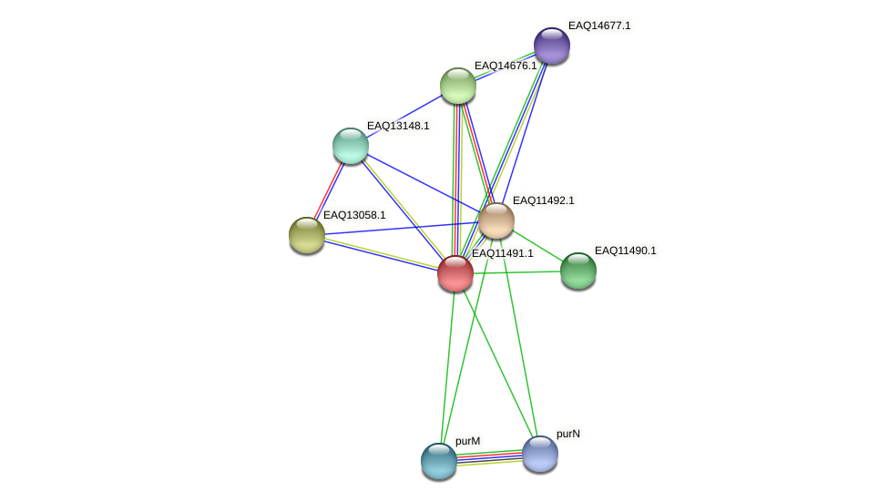 RB2654_01980 protein (Maritimibacter alkaliphilus) - STRING interaction network