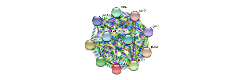 purS protein (Maritimibacter alkaliphilus) - STRING interaction network