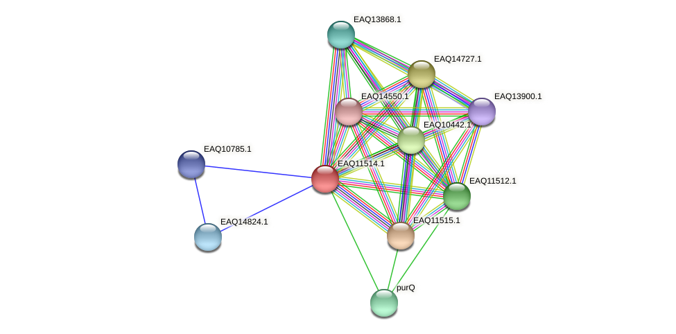 RB2654_02095 protein (Maritimibacter alkaliphilus) - STRING interaction network