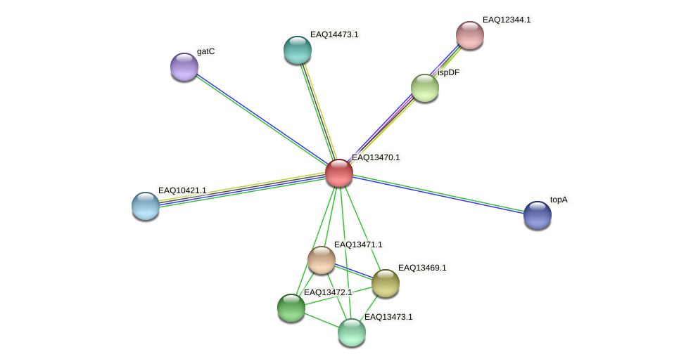 RB2654_02114 protein (Maritimibacter alkaliphilus) - STRING interaction network