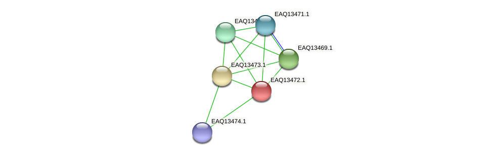 RB2654_02124 protein (Maritimibacter alkaliphilus) - STRING interaction network