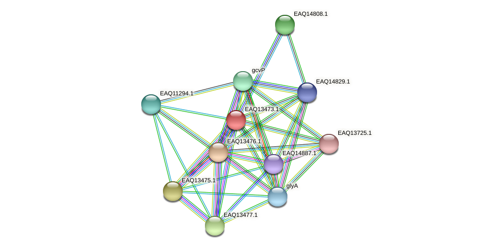 RB2654_02129 protein (Maritimibacter alkaliphilus) - STRING interaction network