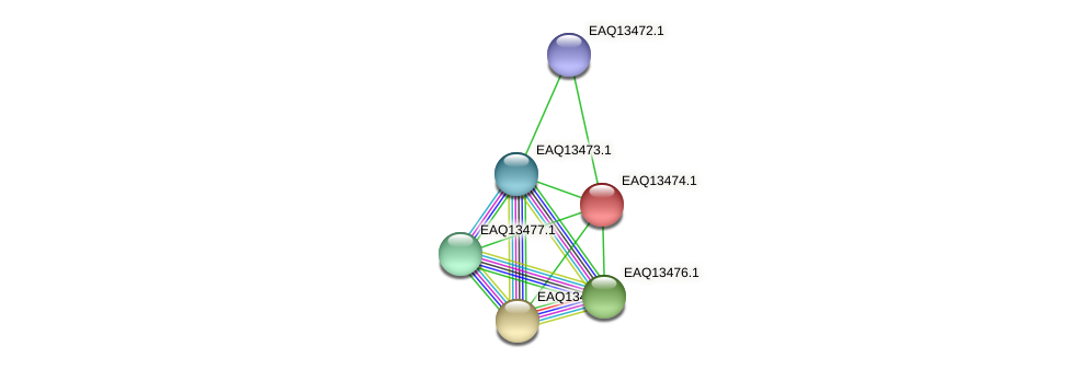 RB2654_02134 protein (Maritimibacter alkaliphilus) - STRING interaction network