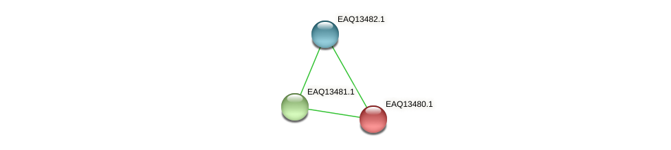 RB2654_02164 protein (Maritimibacter alkaliphilus) - STRING interaction network