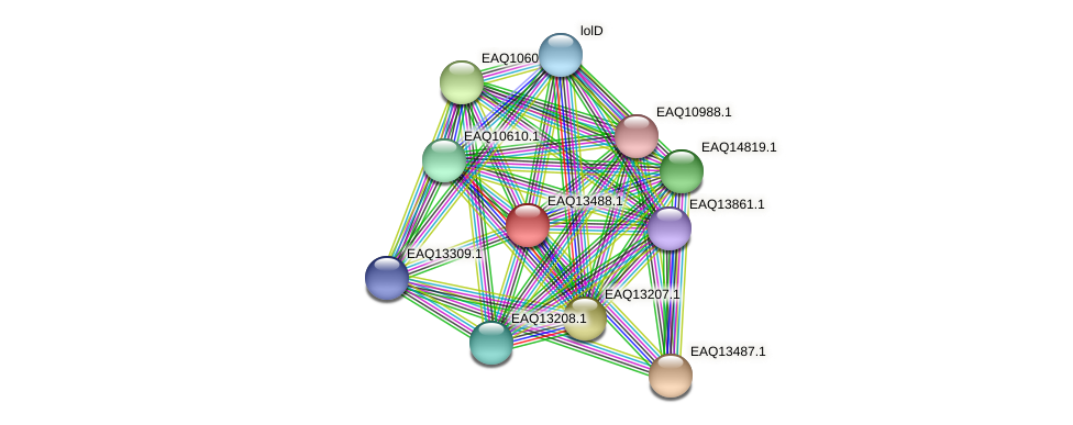 RB2654_02204 protein (Maritimibacter alkaliphilus) - STRING interaction network