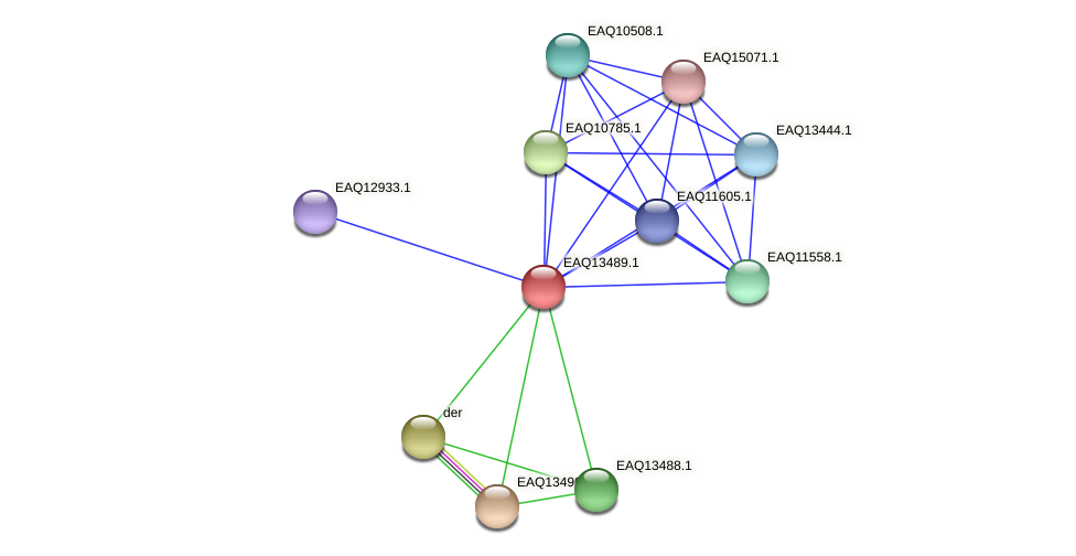 RB2654_02209 protein (Maritimibacter alkaliphilus) - STRING interaction network