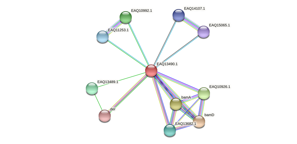 RB2654_02214 protein (Maritimibacter alkaliphilus) - STRING interaction network