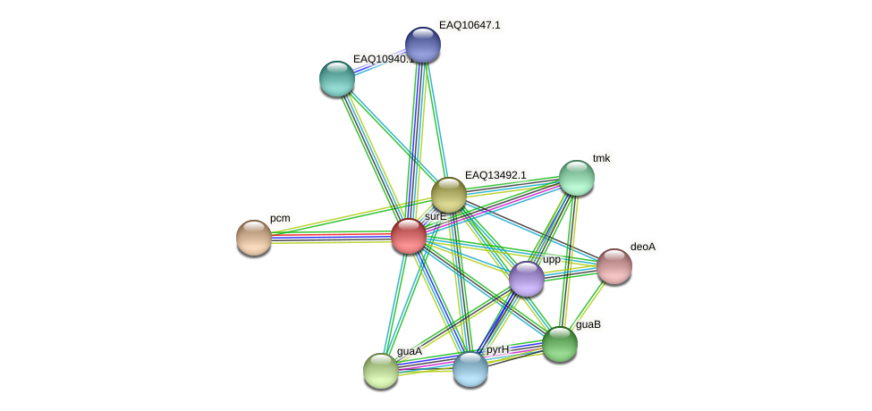 surE protein (Maritimibacter alkaliphilus) - STRING interaction network
