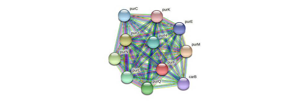 purF protein (Maritimibacter alkaliphilus) - STRING interaction network