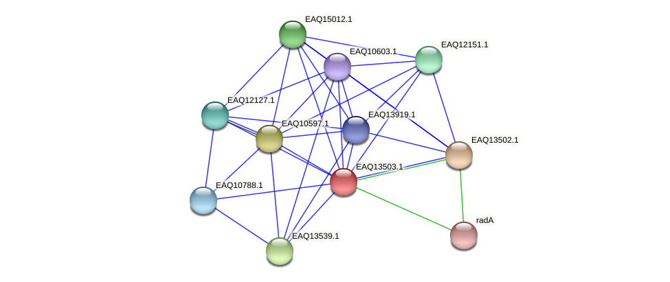 RB2654_02279 protein (Maritimibacter alkaliphilus) - STRING interaction network