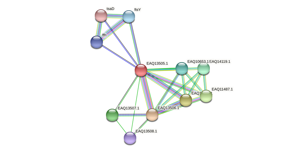 RB2654_02289 protein (Maritimibacter alkaliphilus) - STRING interaction network