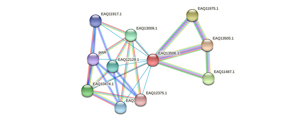 RB2654_02294 protein (Maritimibacter alkaliphilus) - STRING interaction network