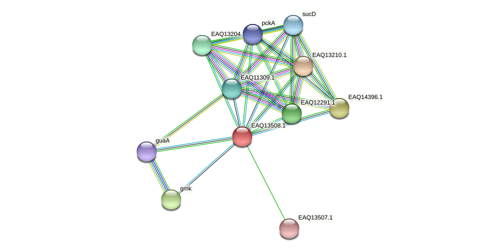 RB2654_02304 protein (Maritimibacter alkaliphilus) - STRING interaction network