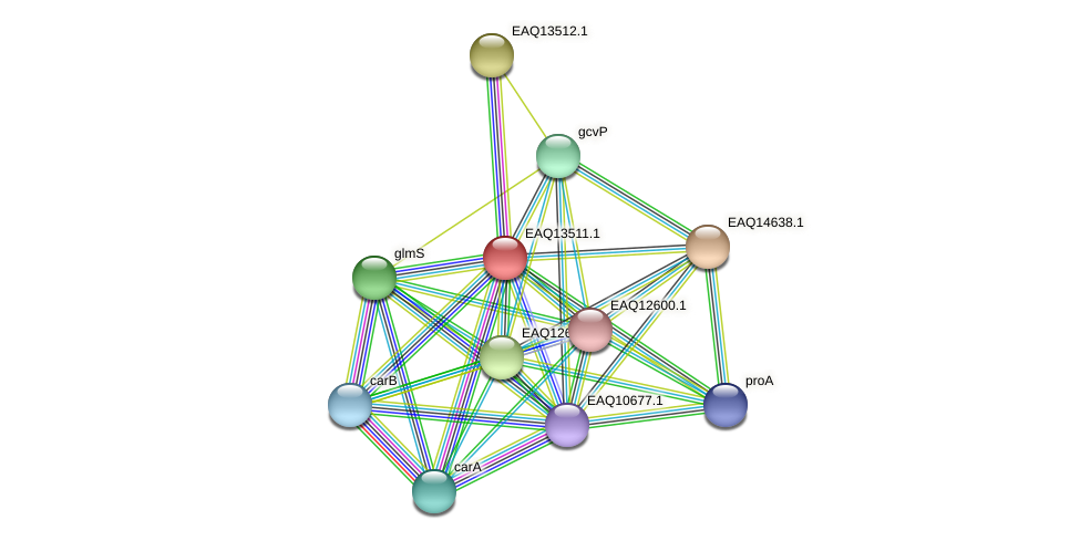 RB2654_02319 protein (Maritimibacter alkaliphilus) - STRING interaction network