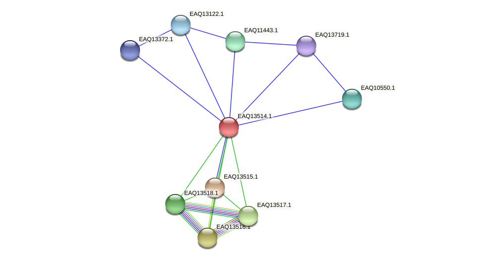 RB2654_02334 protein (Maritimibacter alkaliphilus) - STRING interaction network
